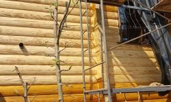 Wooden Evolution: Покраска наружных стен сруба - фото 3