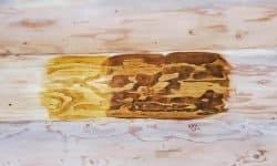 Wooden Evolution: Покраска наружных стен сруба - фото 9